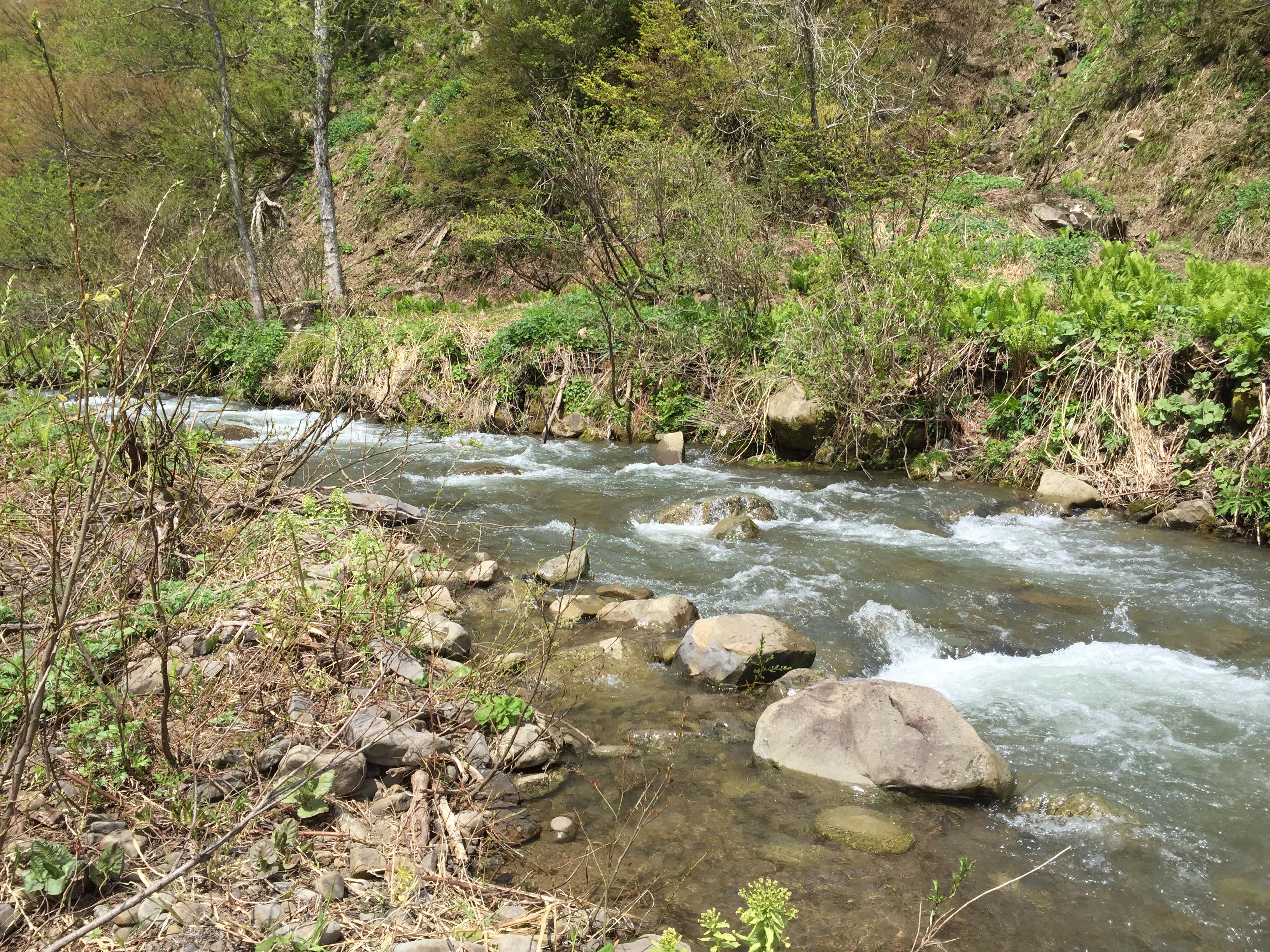 少し水流の強い川