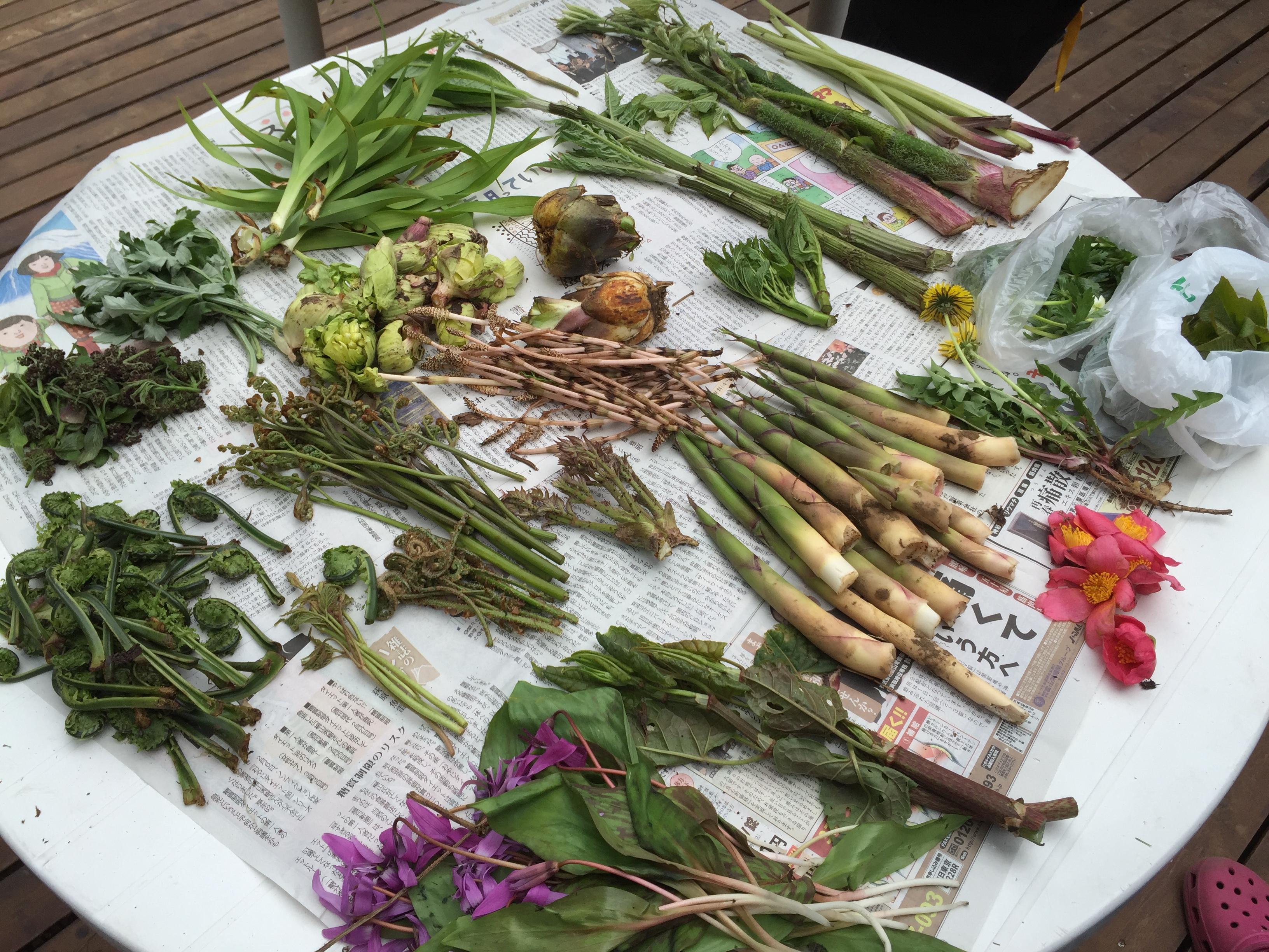 仕分けされた山菜たち