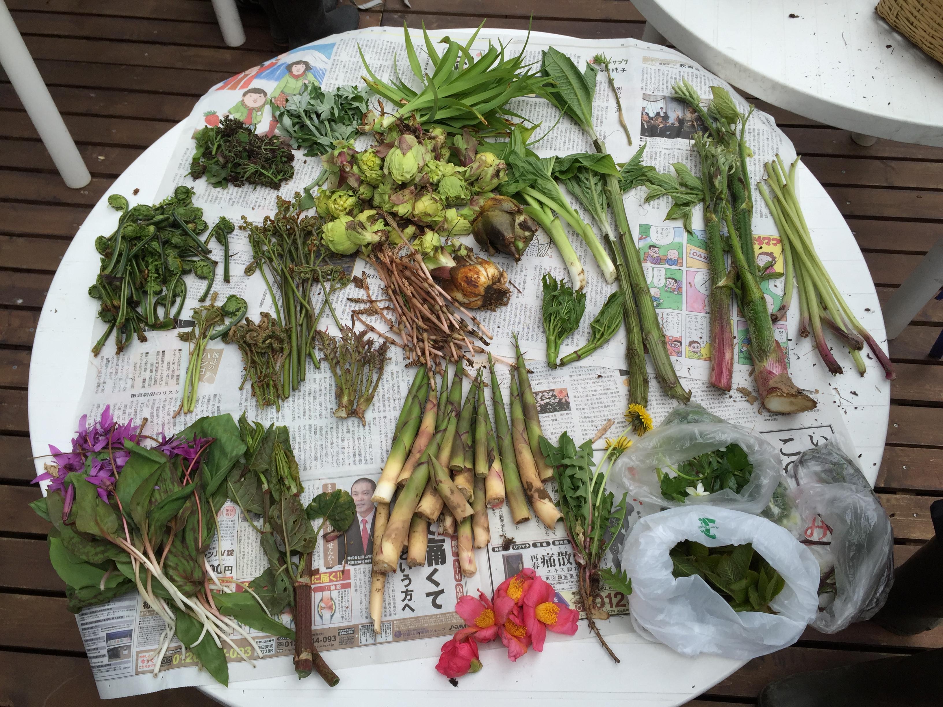 すごい数の山菜