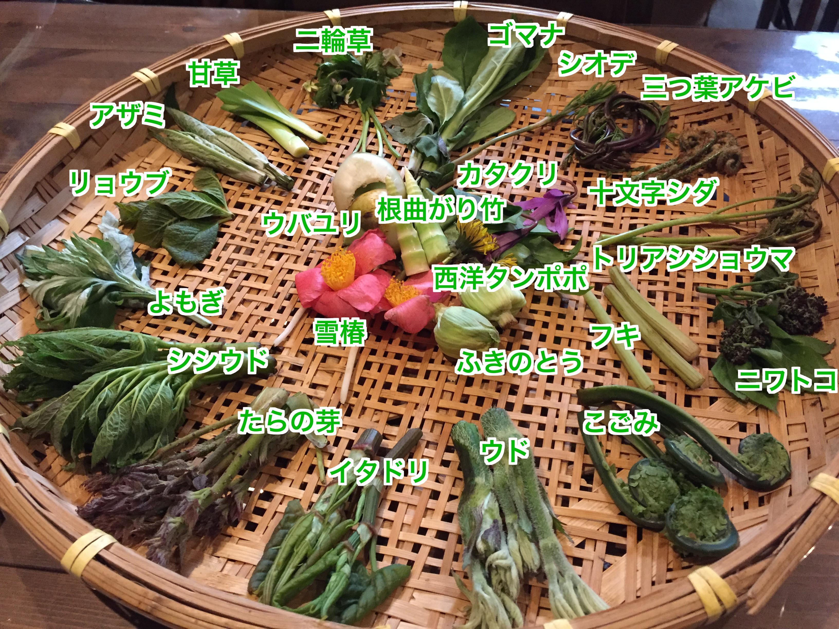 天ぷらになる山菜たち